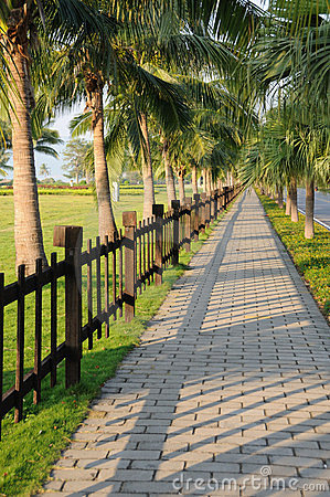 Sidewalk with palm trees.
