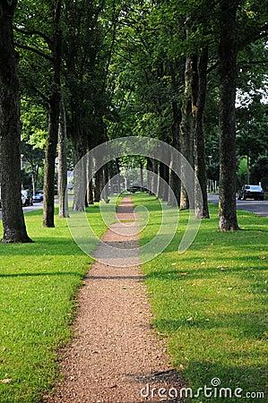 Sidewalk under the trees