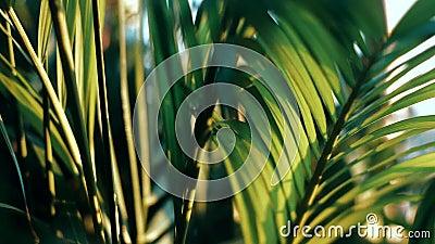 Sidor av palmträdet som fortskrider vinden i aftonen stock video
