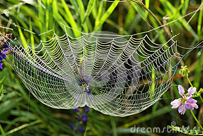 Sieć pająk i rosa