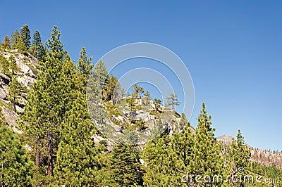 Sierra Nevada mountain forest