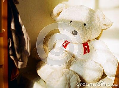 Siesta Bear