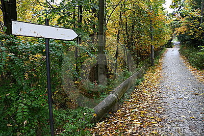 Sign on a road covered by leaves