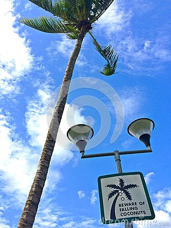 Free Signboard On A Lamp Post At Pasir Ris Beach, Singapore Stock Photo - 50158890