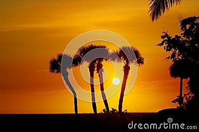 Sihouettes da palmeira de Florida
