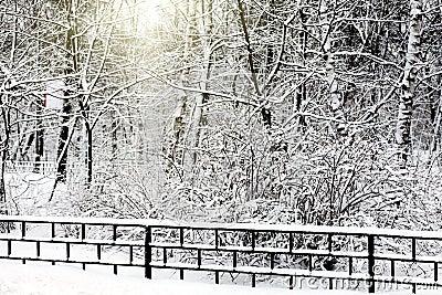 Silent snow-covered urban park