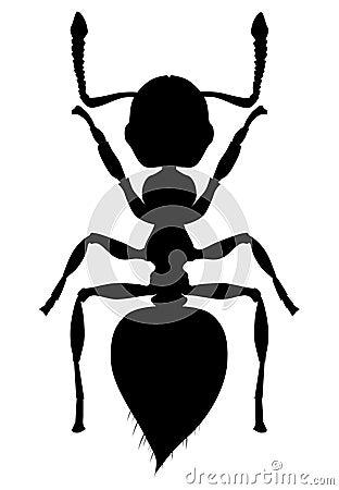 Silhouette Ant Crematogaster