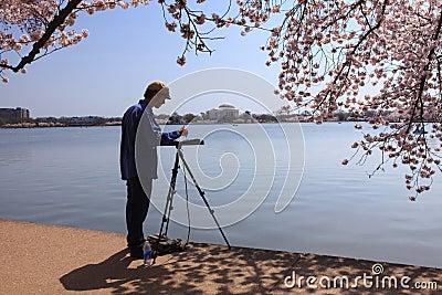 Male Artist Cherry Blossoms Washington DC Editorial Stock Photo