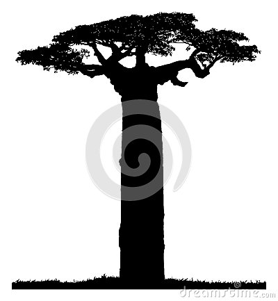 Silhouette of a baobab tree