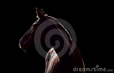 Silhouette of beautiful horse