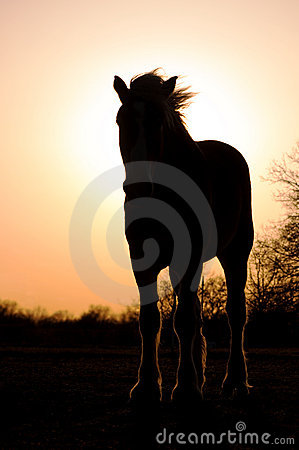 Silhouette of a Belgian Draft Horse