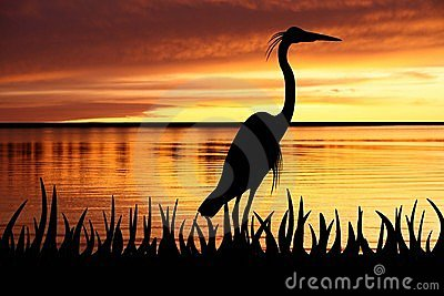 Silhouette of Big White heron staying