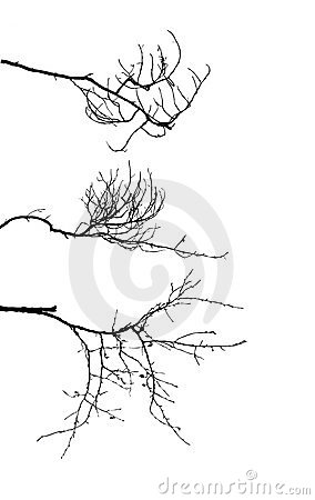 Silhouette of the branch tree
