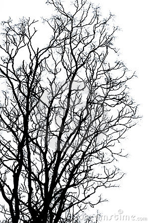Free Silhouette Branches Royalty Free Stock Image - 11018836