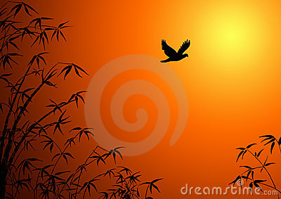 Silhouette of branches of a bamboo.