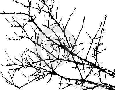 Silhouette of branches of tree
