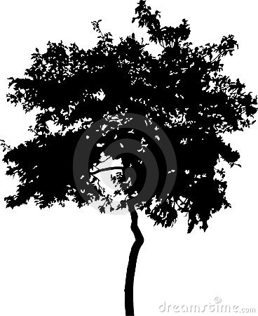 Silhouette of broad-leaved tree