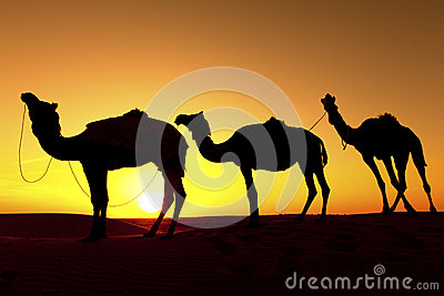 Silhouette of a Camel in the desert.
