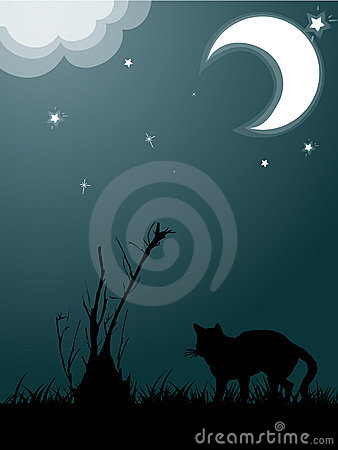 Silhouette of cat in the night