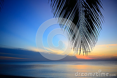 The silhouette coconut leaf