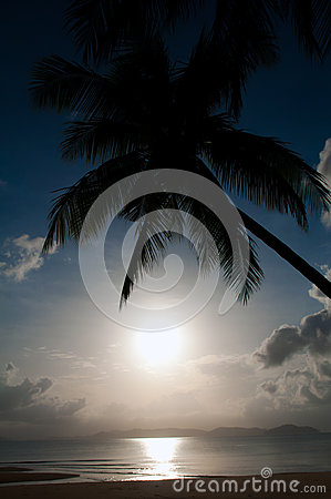 Silhouette coconut palm and sea