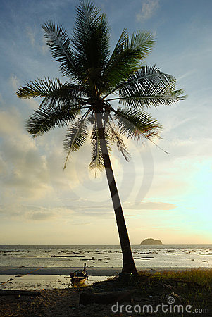 Silhouette Coconut Palm Tree On The Beach, Lipe Stock Images - Image: 17894404