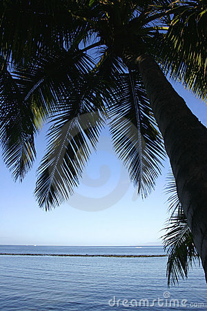Silhouette of coconut palm trees at the beach