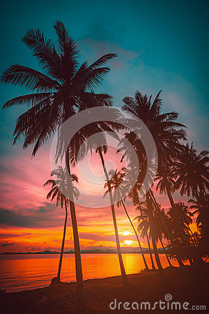 Free Silhouette Coconut Palm Trees On Beach At Sunset. Stock Photography - 81520402