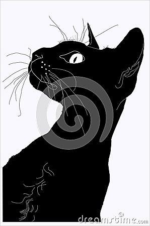 Silhouette d un chat