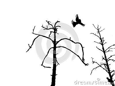 Silhouette dry tree and birds