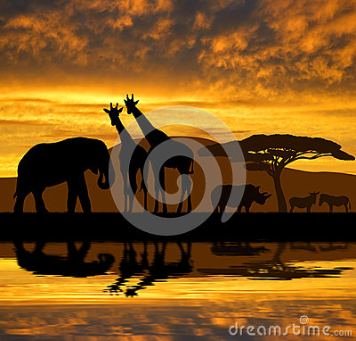 Silhouette elephant,giraffes,rhino and zebras