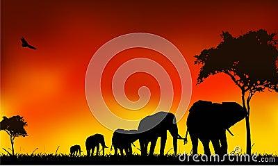 Silhouette elephants trip