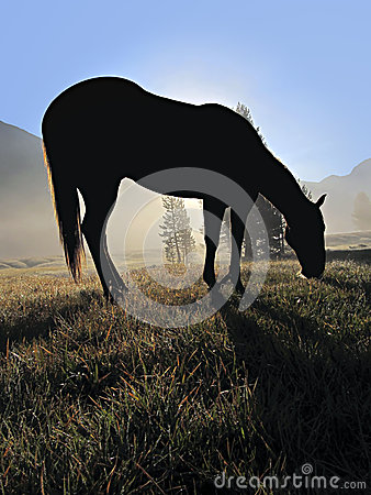 Silhouette of Feeding Horse