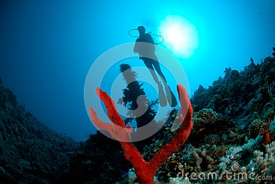 Silhouette of female scuba diver