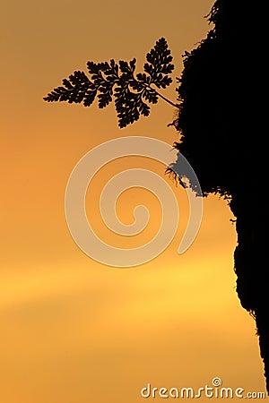 Silhouette fern