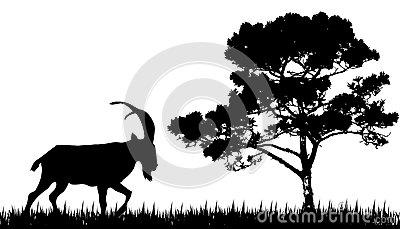 Silhouette of goat and tree