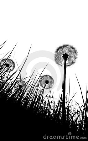 Silhouette of grass n flowers