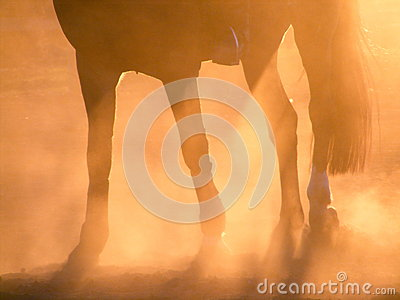 Silhouette of horse legs during sunset