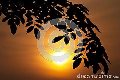 Silhouette leaf