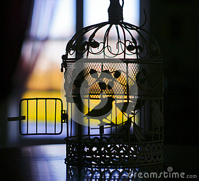 Silhouette of the little bird in a cage on the background for 2 little birds sat on my window