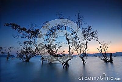 Silhouette of mangrove trees