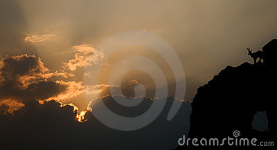 Silhouette of mountain goat at dusk
