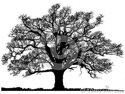 Silhouette of oak tree Stock Photo
