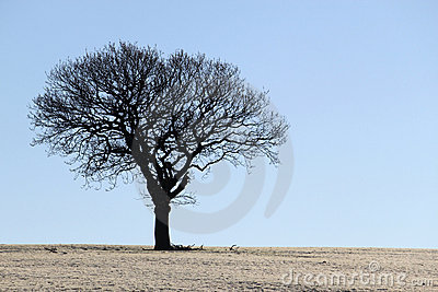 Silhouette of Oak Tree in Winter