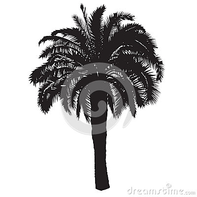 Free Silhouette Of A Date Palm Tree With Fruits Stock Photo - 88443020
