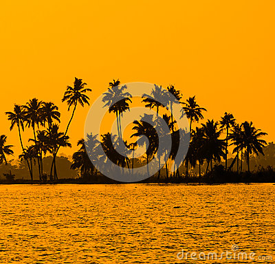 Free Silhouette Of Coconut Palm Trees At Golden Tropic Sunset Royalty Free Stock Photography - 39716917
