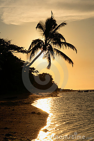 Free Silhouette Of Palm Tree On The Beach At Sunset Royalty Free Stock Photo - 13385935