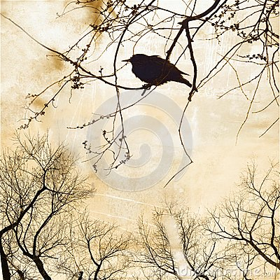 Free Silhouette Of Robin On Bare Tree Stock Images - 28449544
