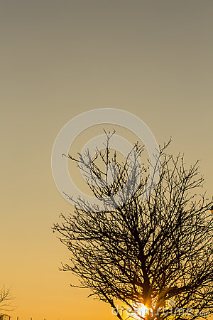 Free Silhouette Of Tree At Sunset Royalty Free Stock Photography - 49895047