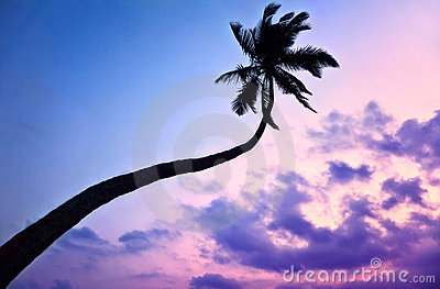 Silhouette of Palm tree at purple sky